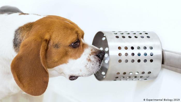 Anjing Ternyata Pendeteksi Penyakit Kanker Yang Luar Biasa