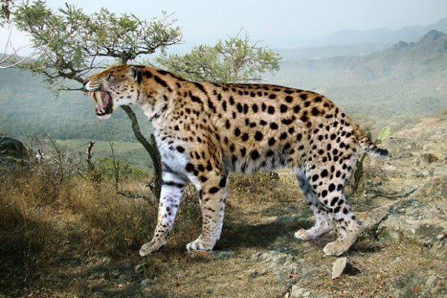 biggest prehistoric cat