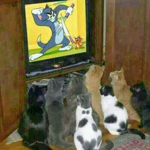 Cats Watching Television TV Tom Jerry Show Image