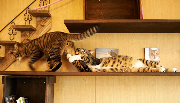 Amores de gatos