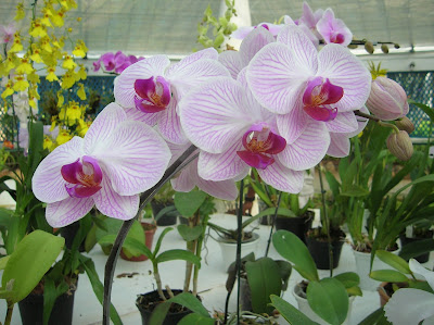Orquídea, Jardín Botánico, jardim Botânico, Rio de Janeiro, Brasil, La vuelta al mundo de Asun y Ricardo, round the world, mundoporlibre.com