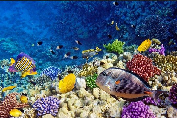 Cara Perawatan Burayak Ikan Hias dalam Akuarium