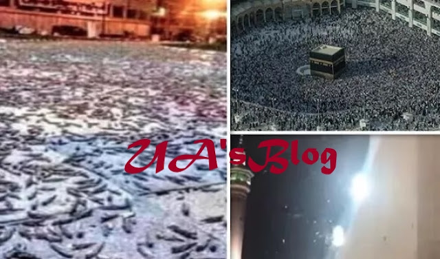 Biblical Plague Of Locust Swarms Invade Mecca, Saudi Arabia