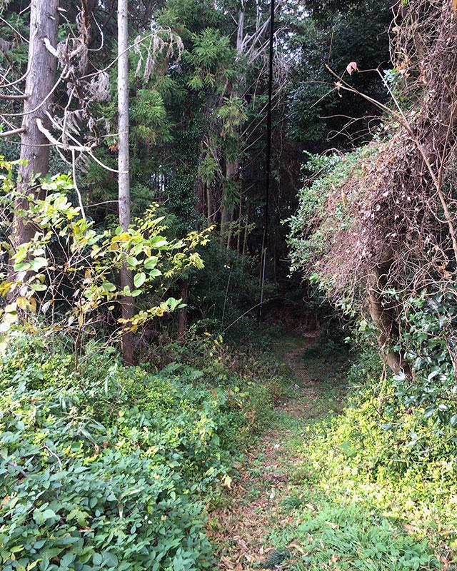 姫街道旧道祝田の坂は金指街道が新道として通ってからは余り利用されなくなったが、地元の方のお話しでは昭和には自転車で頻繁に往き来したものだと言う(2015年12月6日撮影)