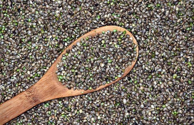 Graines de cannabis/chanvre pour la confection d'huile - Cosmétique Blog