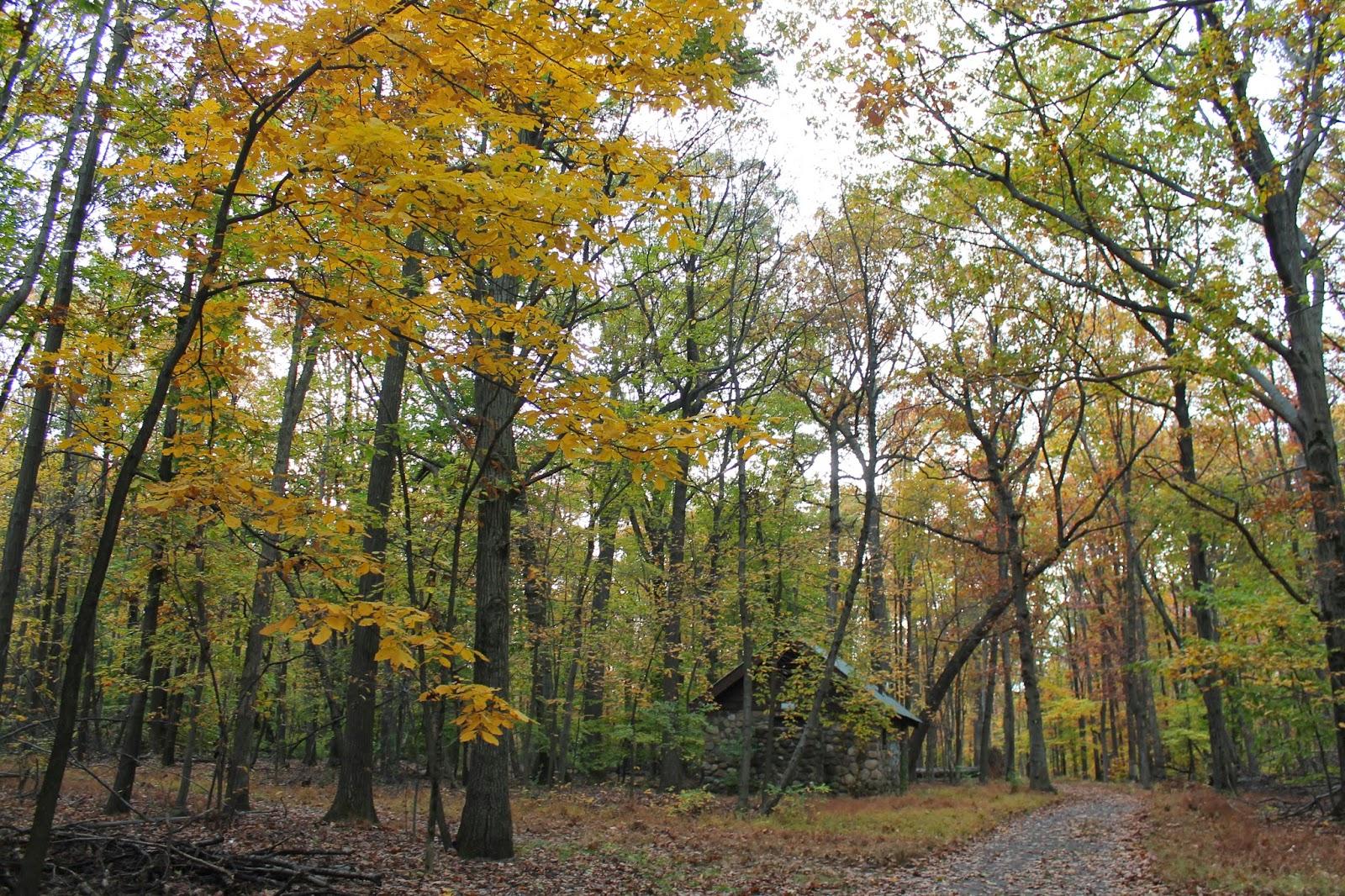 In Between Life Fall Nature Walks