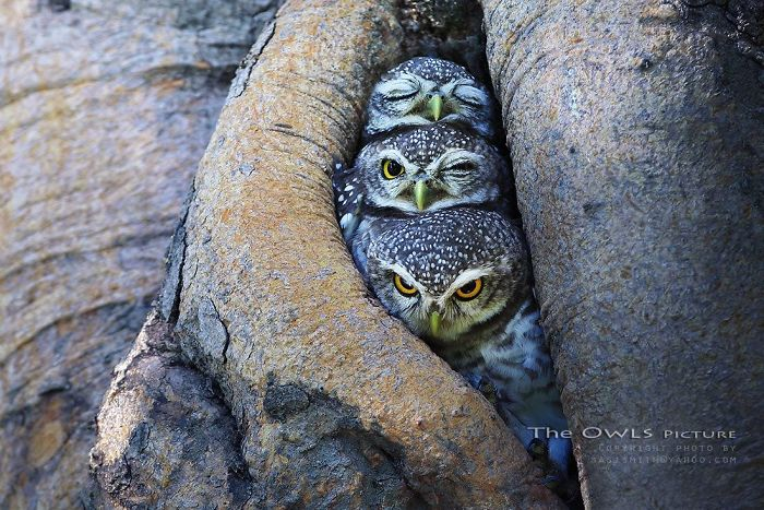 32 Animals That Look Like They're About To Drop The Hottest Albums Of The Year - The Pop Trio Owls