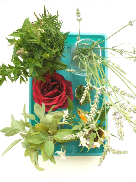 a selection of herbs and flowers used in a sensory activity