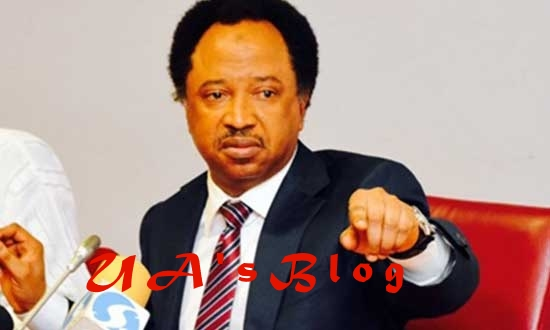 Just In: Prepare To Pack Out Of Government House – Shehu Sani Tells El Rufai
