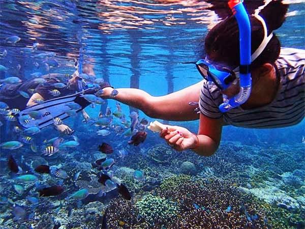 Snorkeling, agenda wajib ketika berada di Raja Ampat