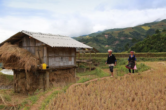 Mu Cang Chai is bustling during the harvest season 5