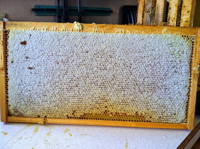 Το εισόδημα και τα κέρδη του μελισσοκομου