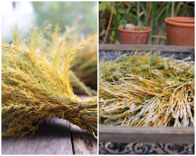 Asparaguskranz gewickelt und gewachst