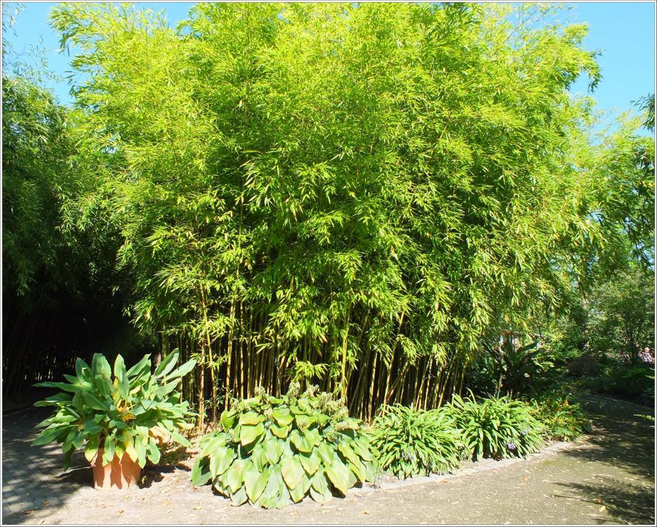 bambus im garten, bambus, kamelien, yuccas : bambus im botanischen garten von hamburg, Design ideen