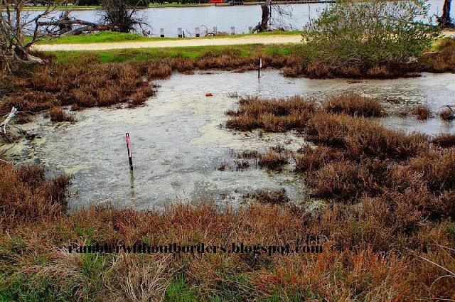 Swamp,  Heirisson Island, Perth, WA