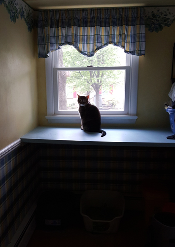 image of Sophie the Torbie Cat sitting in the window in the laundry room
