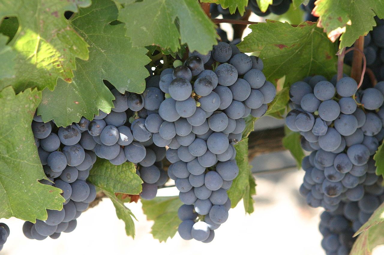 1280px-Malbec_grapes