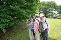 自然観察会「春の公園」 4月28日(土)