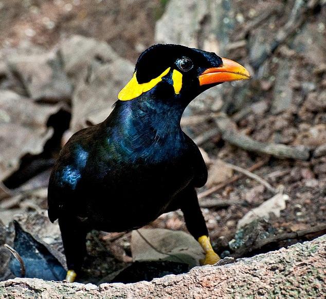 Birds Breeds Gallery - photo#2