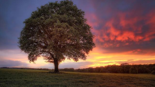 Landschap achtergrond met boom en ondergaande zon