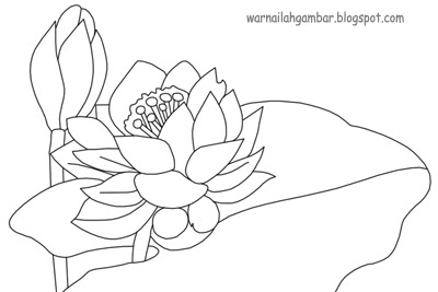 Gambar Bunga Teratai Untuk Mewarnai