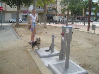 banheiro para animais