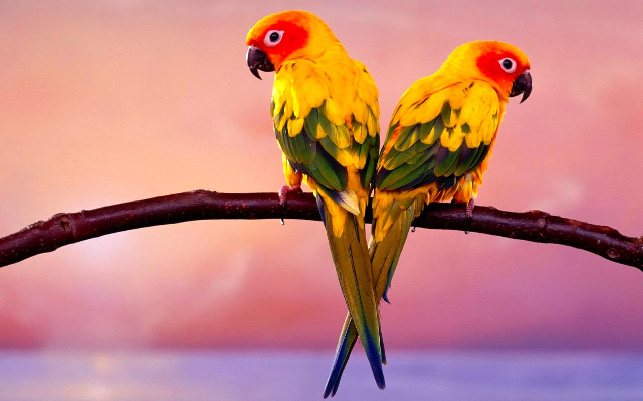 The Most Beautiful Exotic Birds In The world   Marcel Hoffmann