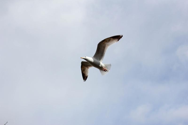 vue d'oiseaux volant au dessus de la rivière du centre de la capitale irlandaise