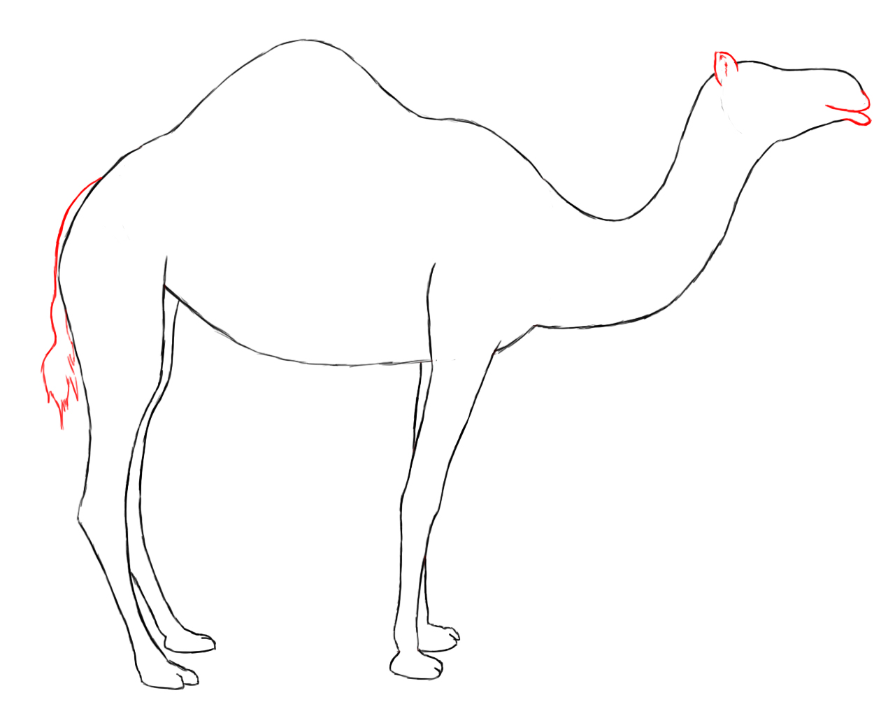 This is a photo of Revered Simple Camel Drawing