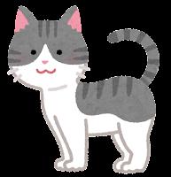 猫の模様のイラスト(サバ白)