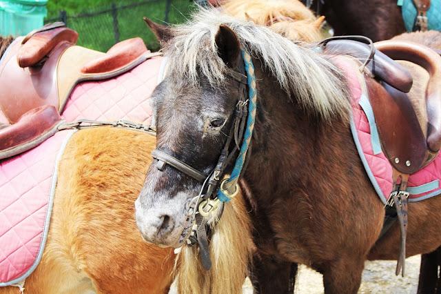 Ponies in Parc Monceau - Paris travel & lifestyle blog