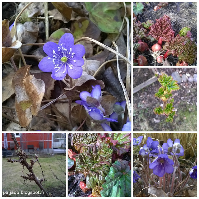 paiqo:kevättä ilmassa