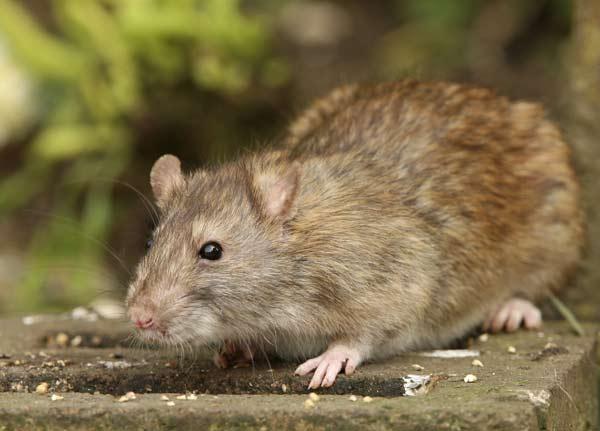 Pest Control - Raleigh NC - Exterminators