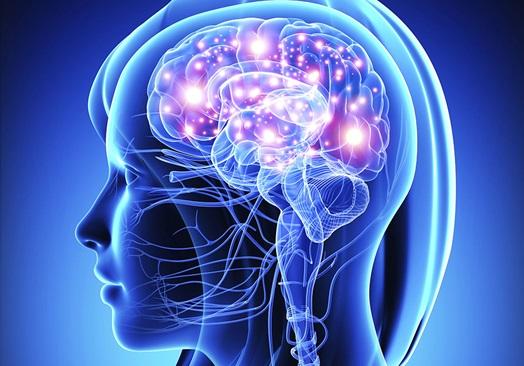 ¿Cuál es la función del sistema nervioso?