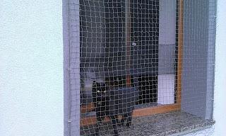 Osiatkowane okno dla kota
