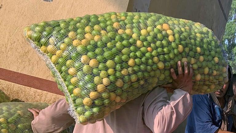 مصر-نقيب-الفلاحين-يطالب-بزيادة-زراعة-أشجار-الليمون-لتجنب-حدوث-أزمة-كبيرة