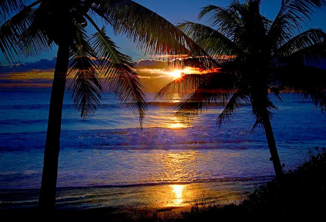 http://lynn-bauer.artistwebsites.com/featured/tropical-sunrise-silhouettes-lynn-bauer.html
