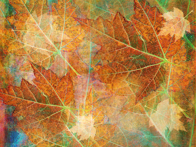 canvas autumn leaf wallpaper