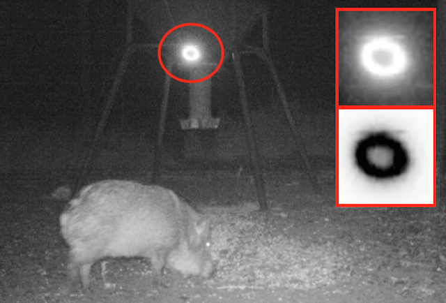 UFO Probe Seen Flying Over Wild Pigs In Texas On Animal Cam UFO%252C%2BSighting%252C%2Bnews%252C%2BScott%2BC.%2BWaring%252C%2Baliens%252C%2BET