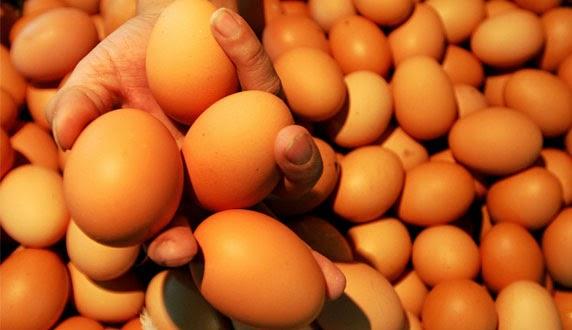 Telur ayam dikenal dengan protein yang tinggi Manfaat Telur Ayam bagi Kesehatan