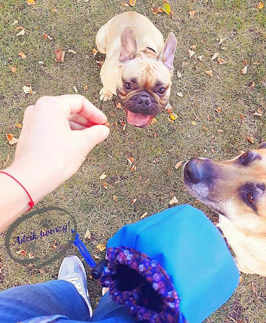 saszetka na smakołyki dla psa