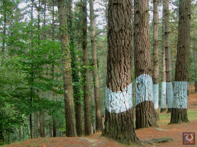 El Bosque Animado de Oma, Kortezubi, Bizkaia