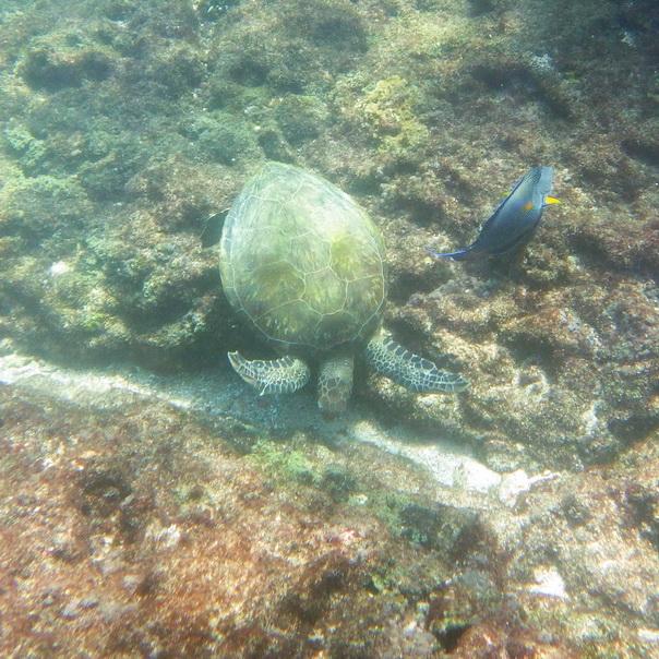 snorkeling, schnorcheln, daymaniyat, islands, inseln, fische, korallen, oman, Muscat, unterwasser, meer, schildkröten, turtles
