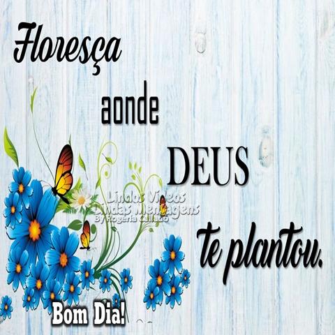 Floresça aonde   Deus te plantou.  Bom Dia!