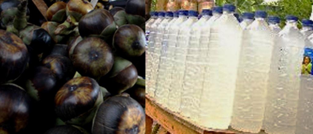 Manfaat Dan Khasiat Minuman Legen Untuk Kesehatan Tubuh Khususnya Ginjal