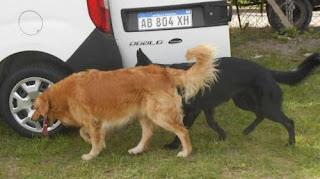 La propuesta fue presentada por un vecino durante una audiencia pública desarrollada por la problemática de la superpoblación canina en Río Gallegos y generó estupor y sorpresa entre el público.