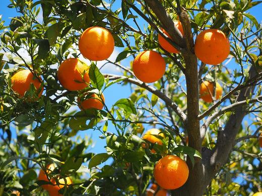 El Consell destina 200.000 euros para fomentar el cooperativismo agroalimentario en la Comunitat Valenciana