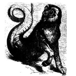 Goetia - Amon (ilustração)