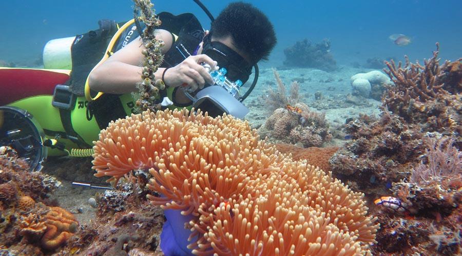 Wisata Laut di Bima NTB indah dan menyelam spot diving indah