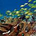 Reserva de la Biósfera del Caribe mexicano, una oportunidad para redireccionar el rumbo turístico